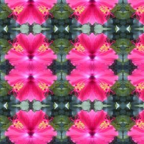 Pink hibiscus photo