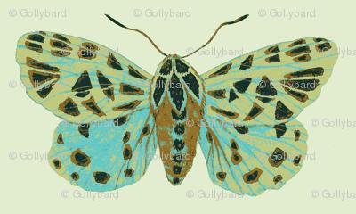 Tiger Moths Sweetfern