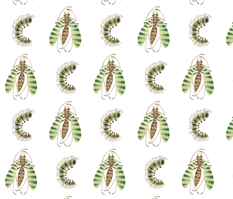 Zebra Fly  fabric by gollybard on Spoonflower - custom fabric
