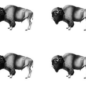 Black and White Vintage Bison Print