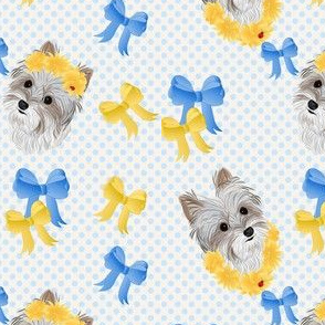 Yorkie - Parti with Blue & Yellow