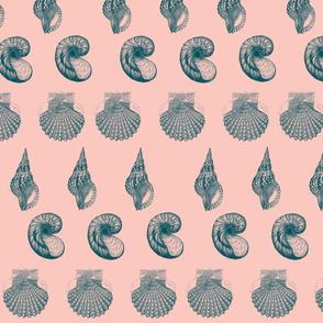 Watermelon Shell