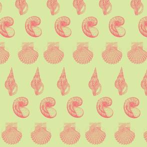 Honeydew shell