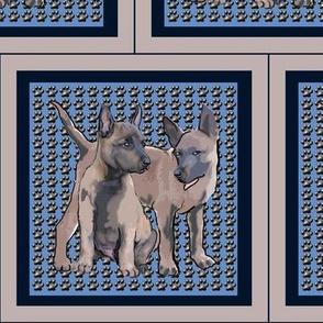 Belgian_Malinois_Pups