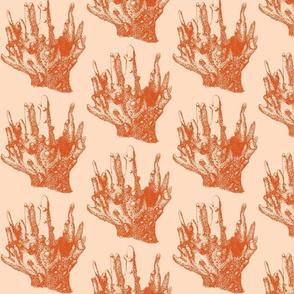 coral colony-peach