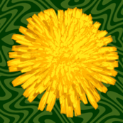 giant dandelions on green swirl
