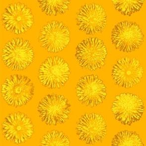 dandelions on saffron
