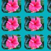 Hibiscus Panes