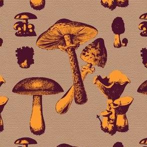 Mushroom Orange