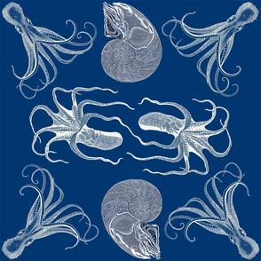 cephalopod dance