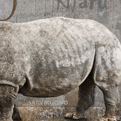 Rrrrrhino_fabric_banner_shop_thumb