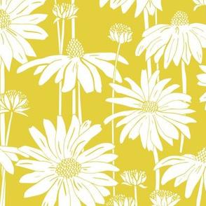Sunshine Daisy