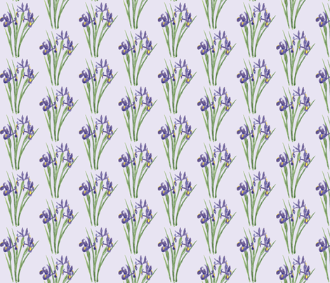 Irises on Lavender (version 1)
