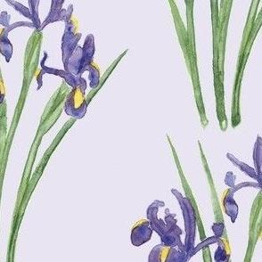 Irises on Lavender (version 1)