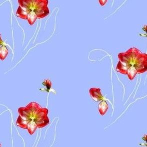 Edie's Amaryllis (small)