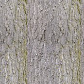 Rscarlet_oak_bark__shop_thumb