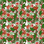 Cannabis Christmas?