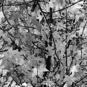The Wild Wood ~ Black and White