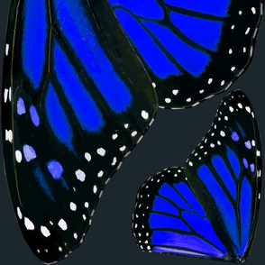 Giant Blue Monarch Butterfly Wings