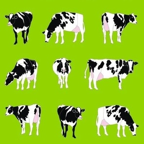 Dairy Cows on Green