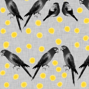 Birds and Dots 02