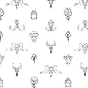 Geometry Animal Skulls #1