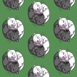 Black And White Yin Yang Kittens