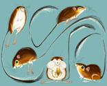 Rrrrrkangaroo-rats_thumb