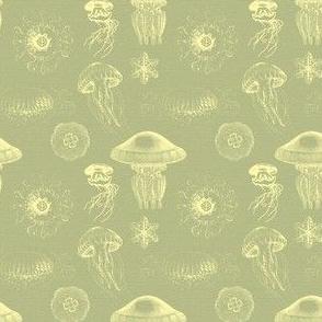 jellyfish Yellow