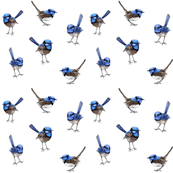 WRENS Scattered on White