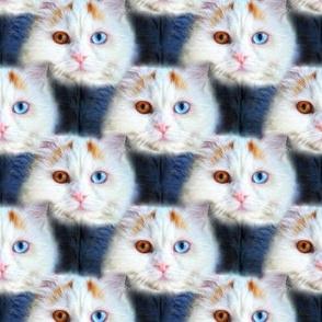 Persian Kitty Love