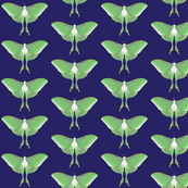 Luna Moth on Midnight