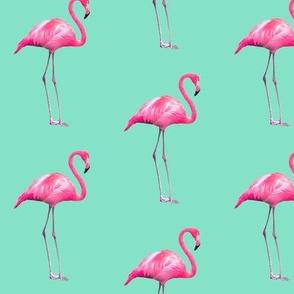 Bombastic Flamingo ©