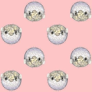 Blow Fish in Pink