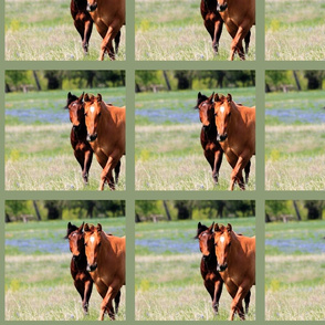 Horses & Bluebonnets II