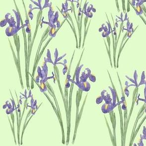 Irises on...
