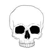 angie_skull_no_jaw_on_white