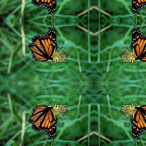 Monarch on Dandelion