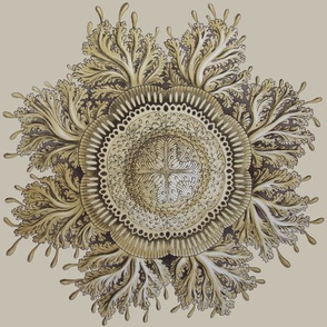 Haeckel Jellyfish ceiling medallion
