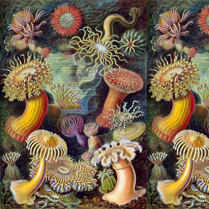 Ernst Haeckel Sealife