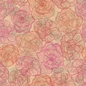 Rose Regalia (pink and peach)