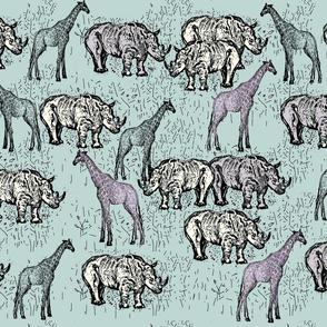 Family Rhinocerotidae. 1