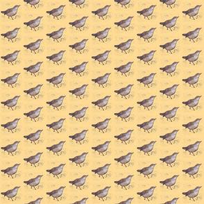 Dipper Bird Flock