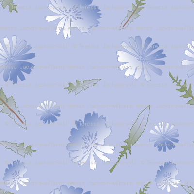 Chicory_Blush