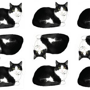 morrison the tuxedo cat