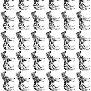 zebra_scan