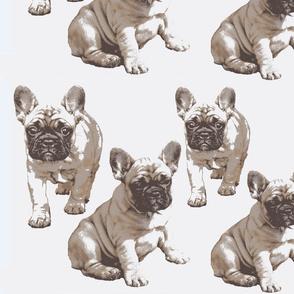 Kerstin French bulldog puppy