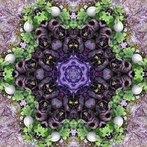 Lushous Blooms