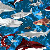 Sharks_in_the Blue.