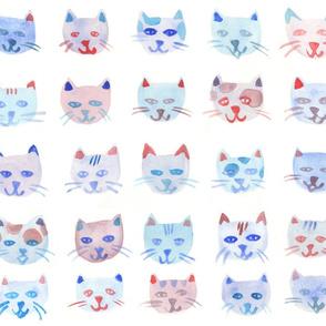 Gattini - Kitten